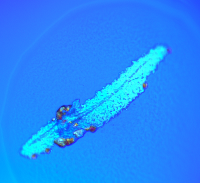 A feather-like artifact of protein crystallization