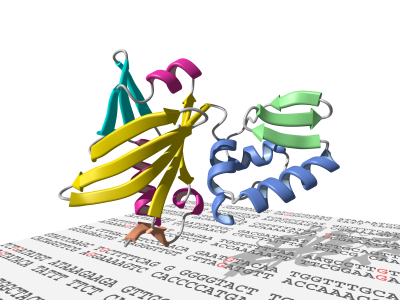 DNA Polymerase X from the African Swine Fever Virus